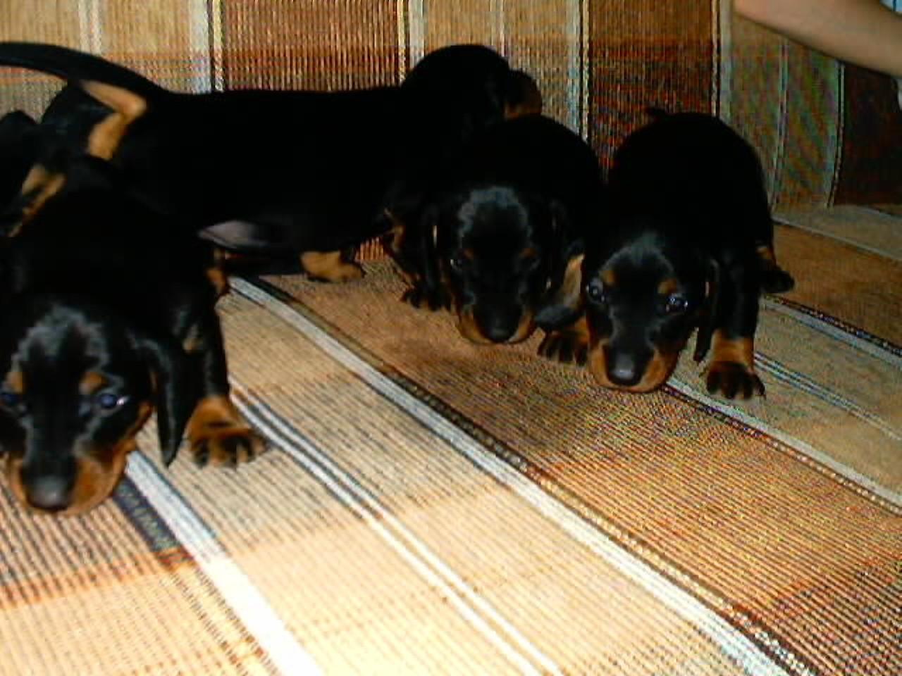знакомство для собак в кирове